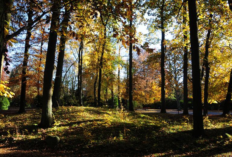 Waldteil Ohlsdorf