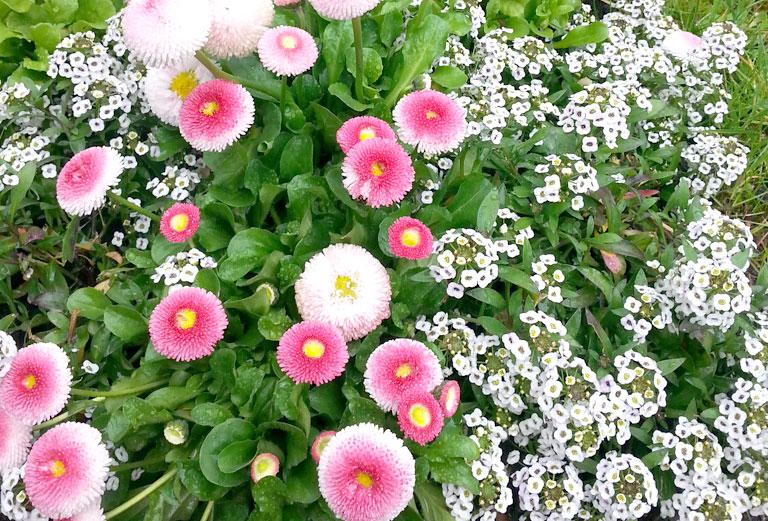 Blumen Grabpflege