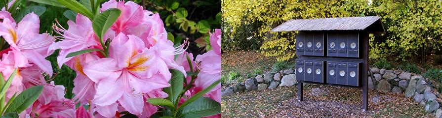 Rhododendron / Naturlehrpfad