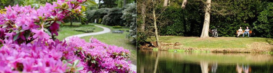 Rhododendron / Parklandschaft