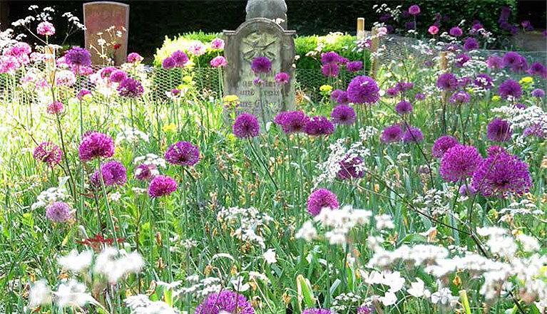Wildblumengarten